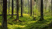 Ekspertpanel av forskere advarer om bioenergi