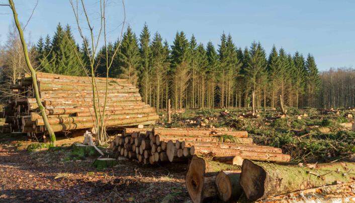Mer skog hugges for å bli til bioenergi. (Foto: Bjorn Kristersson / Shutterstock / NTB scanpix)