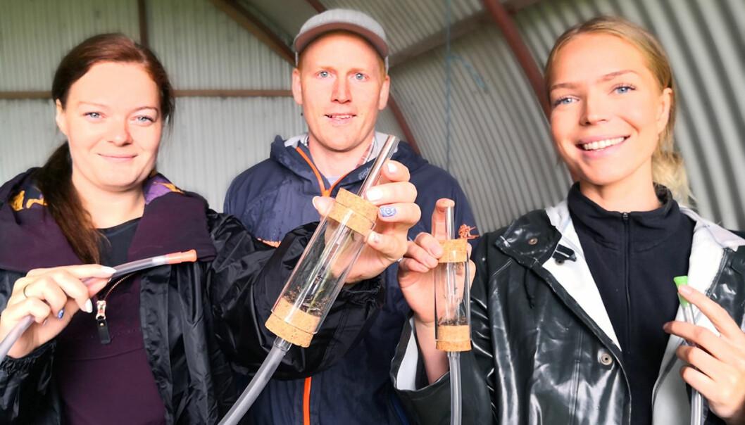 Fant malariamygg på Tautra: Studentene Mona Olsen Ryum (til venstre), forsker Sondre Dahle fra NINA og student Maja Fasting. (Foto: Borgar Sagbakken, NRK)