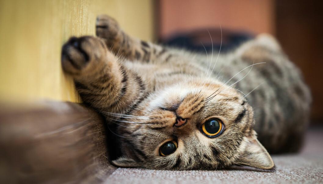 «Mjau! Bli med å lek da». (Foto: GreenArt / Shutterstock / NTB scanpix).