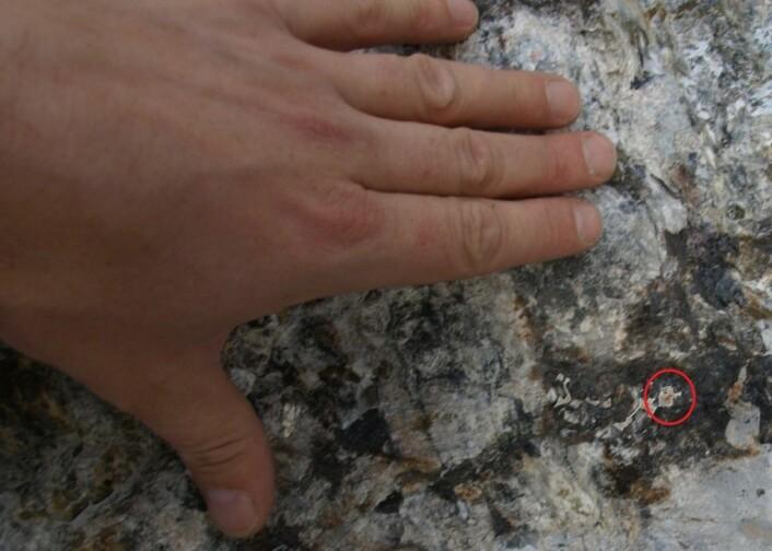Slik såg mineralet ut då det vart funne. Berre eit trena auge ville leggja merke til noko spesielt her. (Foto: Peter Andresen)