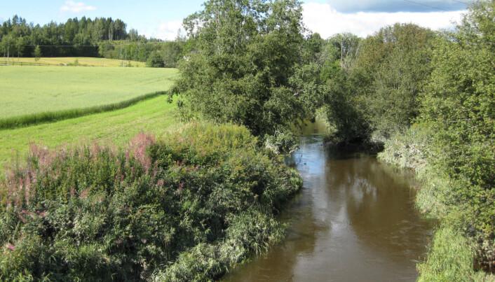 En buffersone mellom åker og elv kan forhindre erosjon og fungere som et rensefilter. Tiltaket bidrar også til økt biomangfold. (Illustrasjonsfoto: Eva Skarbøvik)