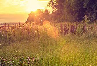 Tyskland har lagt en plan for å redde insektene sine