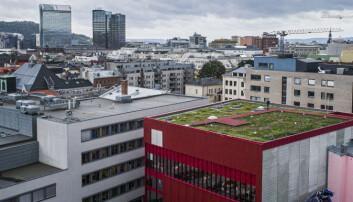 Blomster og bier på Oslos første blågrønne tak