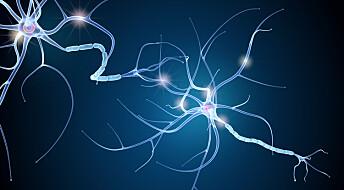 Nyoppdaget stoff hindret MS-symptomer hos mus
