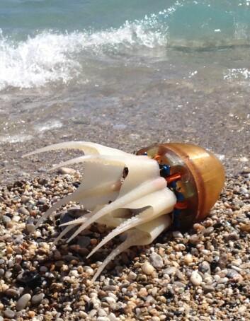 Blekksprutroboten fikk testet ferdighetene på svømmetur i havet. (Foto: Dimitris Tsakiris)