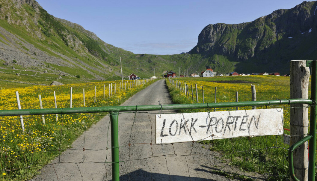 Port på smal grusvei på Vestvågøy i Lofoten. (Foto: Bjørn Jørgensen, Samfoto)