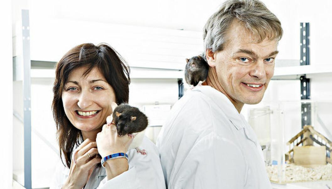 Ekteparet May-Britt og Edvard Moser er blant de norske forskerne som publiserer flest artikler i Nature og Science. De mener Norge trenger en mentorordning, der yngre forskere kan få snakke med eldre forskere. (Foto: Stein J. Bjørge, Scanpix)
