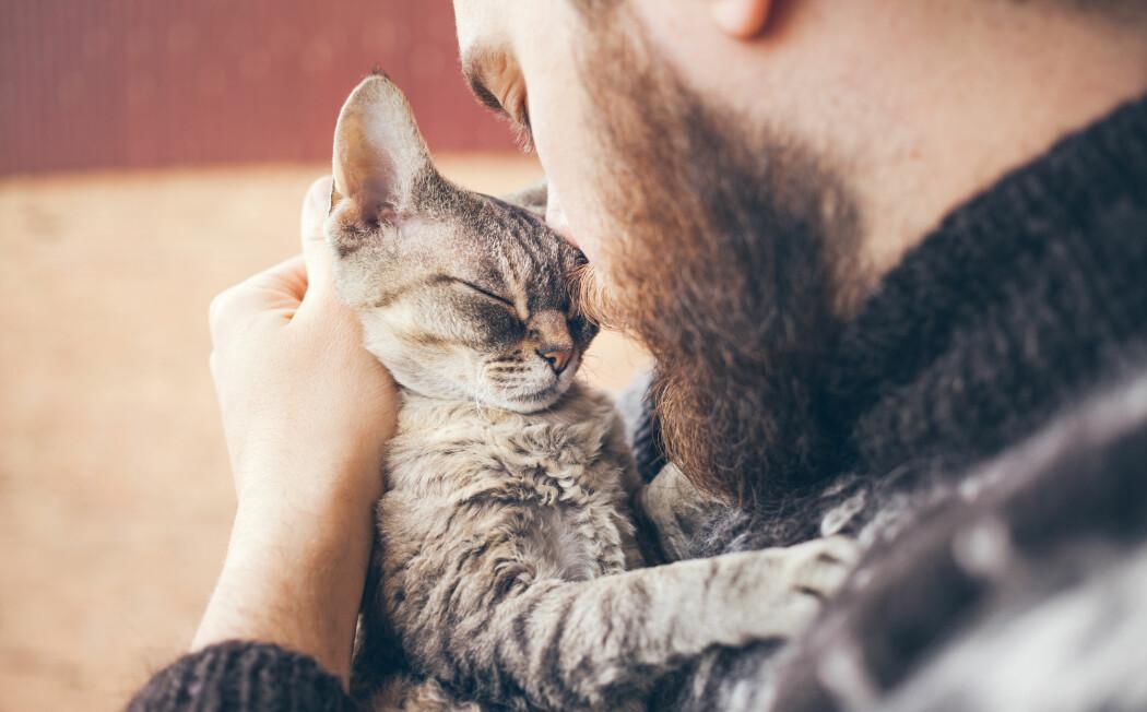 Katten gir ikke katten i eieren, ifølge ny forskning. (Illustrasjonsfoto: Veera / Shutterstock / NTB scanpix)
