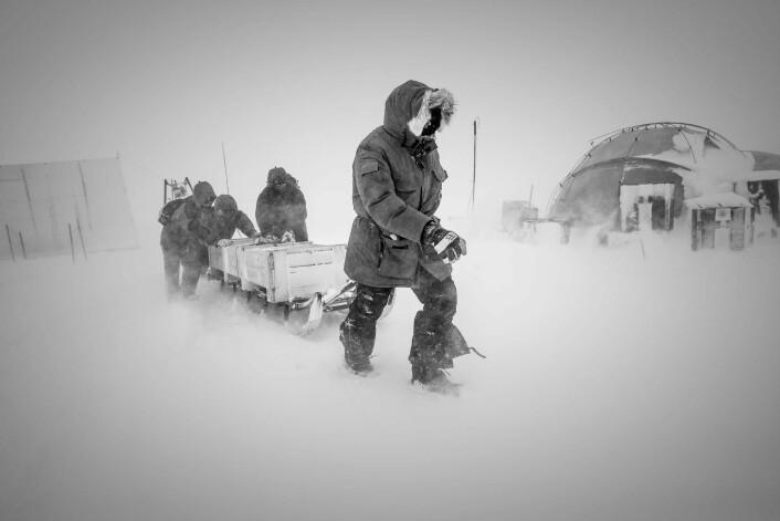 Forskere transporterer utstyr ved NEEM-campen i det nordlige Grønland.  (Foto: Christian Morell, Science)
