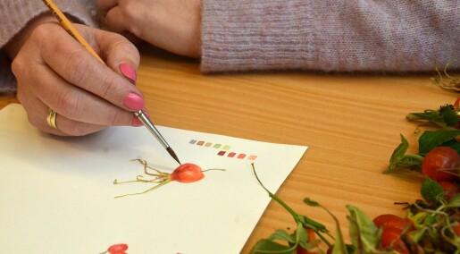 Botanisk illustrasjon trumfar digitalfoto