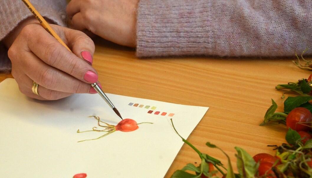 Kunstnar Hege Sviggum er ein av få i Noreg med utdanning i botanisk illustrasjon. (Foto: May Grethe Lerum)