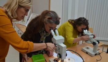 Inger Auestad (t.v) og deltakarane på workshop i botanisk illustrasjon ser detaljar i plantedelane, detaljar sjølv det beste foto ikkje kan framheve på ein god måte. (Foto: May Grethe Lerum)