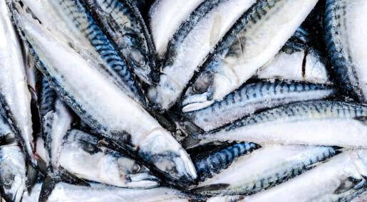 Reduserer antall bananformet fisk med rettemaskin