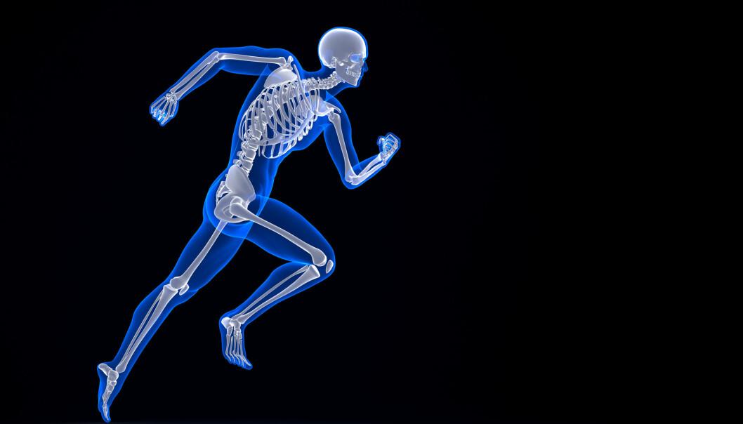 Adrenalin er ikke det eneste stresshormonet. Ny studie viser at skjelettet også setter i gang akutt stress.