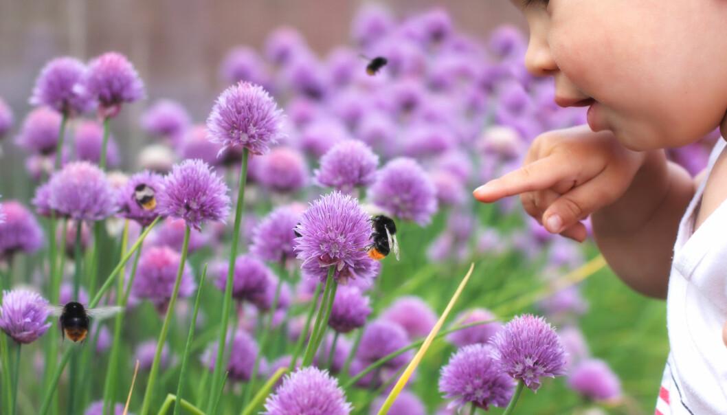 – Vi vil at barna skal forstå samanhengen mellom humlene, plantene og maten vi har på bordet, fortel Kristin Grøsvik ved UiS. (Illustrasjon: Trofimov Denis / Shutterstock / NTB scanpix)