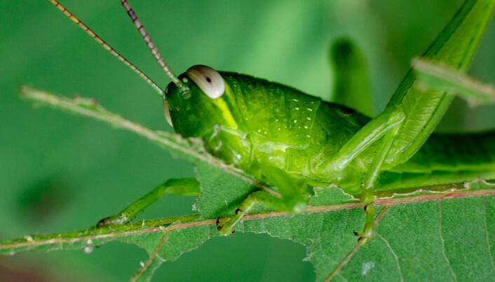 Slik vet planten om den blir utsatt for et insekt eller sykdom