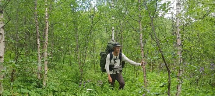 En kort historie om plantesamfunn