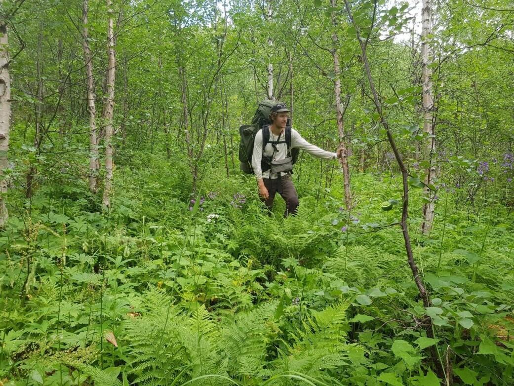 Høgstaudesamfunn – en enhet i naturen eller bare en samling arter med likt krav til voksested? (Foto: Marte Fandrem, CC-BY 4.0.)
