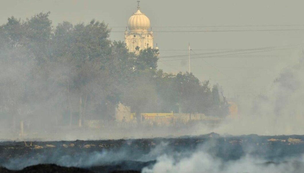 Brenning av en risåker i India for å effektivisere jordbruket.  (Foto: NP India Burning/Wikimedia Commons)