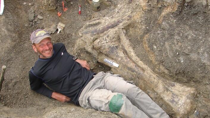 Den amerikanske paleontologen Kenneth Lacovara poserer ved sida av kjempedinosauren sitt skinnebein på utgravingsstaden i Patagonia, Argentina. (Foto: Kenneth Lacovara, Reuters)