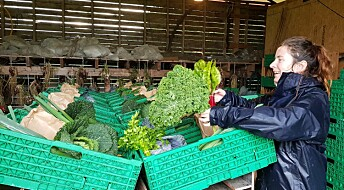 Mange fordeler med å selge økologisk frukt og grønt i alternative salgskanaler