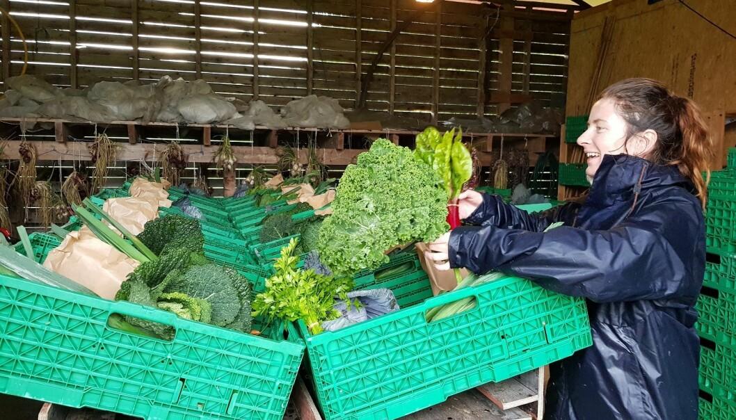 I et andelslandbruk fordeles produksjonen på andelshaverne. Én andel er ment å dekke grønnsakforbruket til en voksen person gjennom sesongen. (Foto: Anna Birgitte Milford)