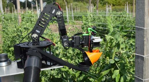 Roboten plukkar sukkererter
