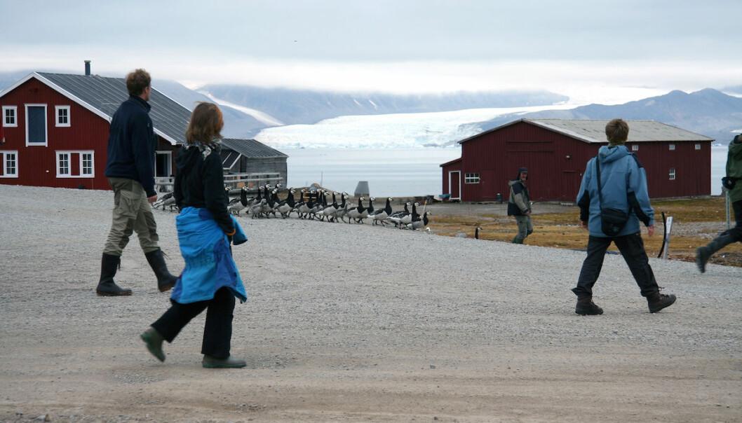 Forskere og gjess i Ny-Ålesund. (Foto: Oddvar Midkandal)
