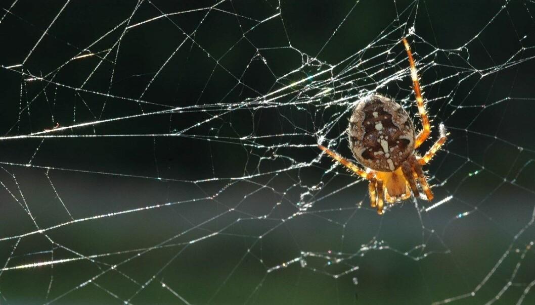 KORT OM HAGEKRYP: Lille Petter edderkopp hjelper deg i hagen
