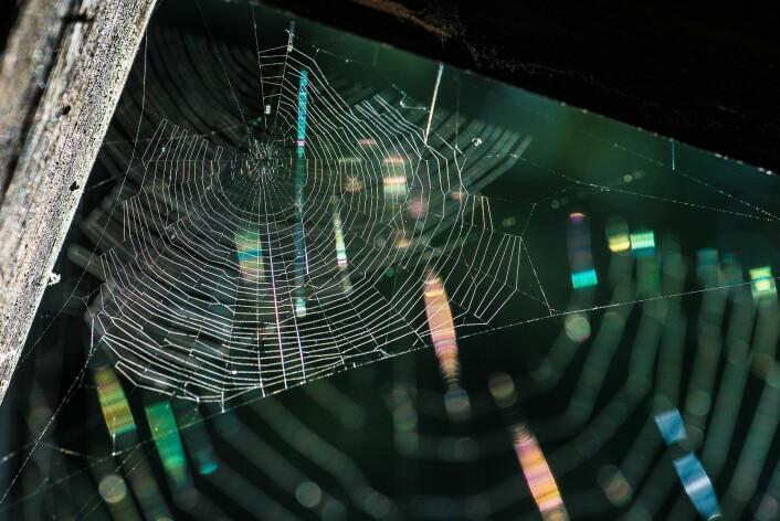 Edderkoppnett synes best i motlys. (Foto: Erling Fløistad)