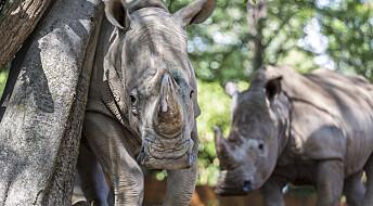 Handel med ville dyr er langt mer omfattende enn tidligere kjent