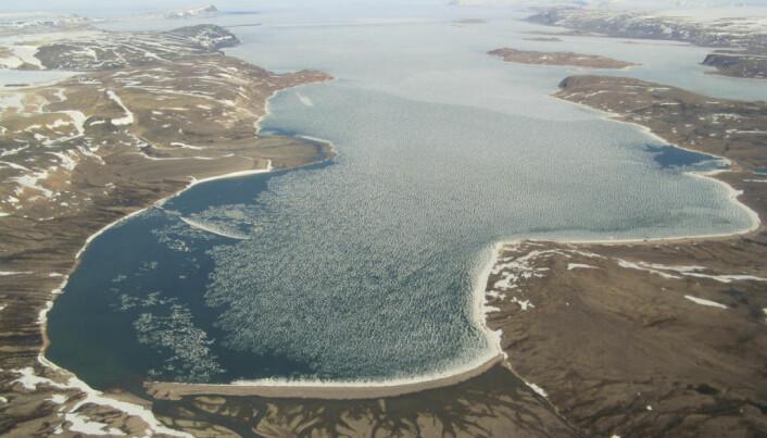 Nygla, Galtedalen, Strandbukta, Rakhallet og Måsegget er nye stadnamn i Rijpfjorden. (Flyfoto: Anders Skoglund / Norsk Polarinstitutt)