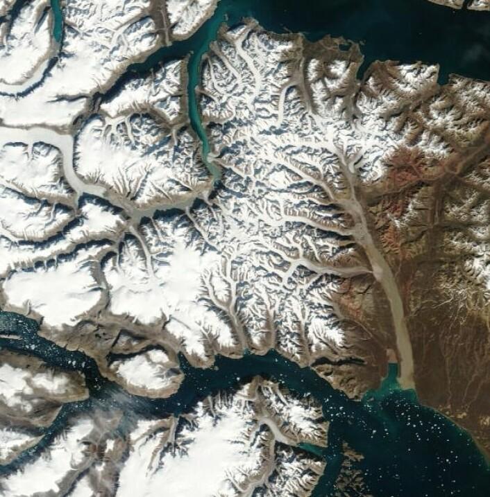 Scoresby Sund sett fra rommet 27. august.  (Foto: NASA Terra MODIS)