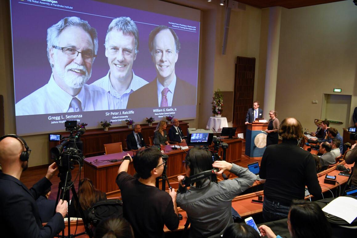 Her blir prisen i medisin annonsert i Stockholm. De tre vinnerne blir vist på skjermen. Nobelprisene vekker stor oppmerksomhet i aviser, tv og radio over hele verden. (Foto: Pontus Lundahl Reuters / NTB Scanpix)