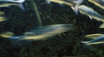 Folkehelsen trues av motstandsdyktige bakterier i sjø og vann