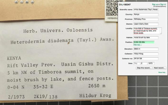 Slik gjer du det: informasjonen frå etiketten til venstre vert lagt inn i boksen oppe til høgre. (Foto: (Skjermdump: gbif.no/dugnad))