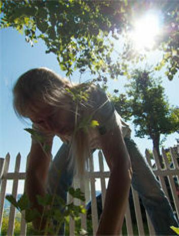 Kristina Bjureke plantar ut kvitmure. Stakittgjerdet i bakgrunnen dannar grensa mellom ein privat hage og naturreservatet. (Foto: Honorata K. Gajda, Norsk Botanisk Forening)