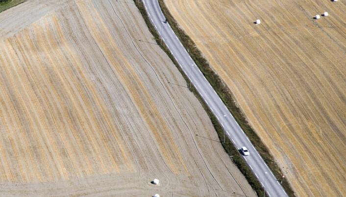 Telemark 2018.Tørken førte til dårlige avlinger for svært mange bønder (Foto: Berit Roald / NTB scanpix)