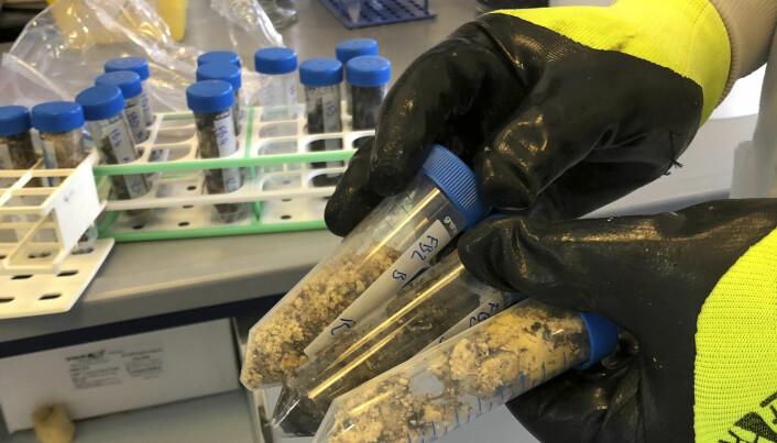 Her holder en av forskerne fram prøver av materialet de fikk tilsendt. Forskerne undersøkte blant annet om de inneholdt skadelige mikrober. (Foto: University of Exeter via AP)