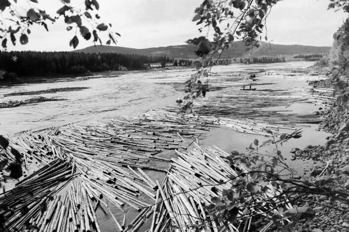 Den kraftfulle innsatsen for å gjøre vassdragene farbare allerede fra 1500-tallet, må forstås ut fra betydningen av det norske tømmeret. Norsk tømmer ble viktig for mange europeiske byer i årene før 1814, påpeker Tove Nedrelid fra NVE. (Foto: Scanpix)