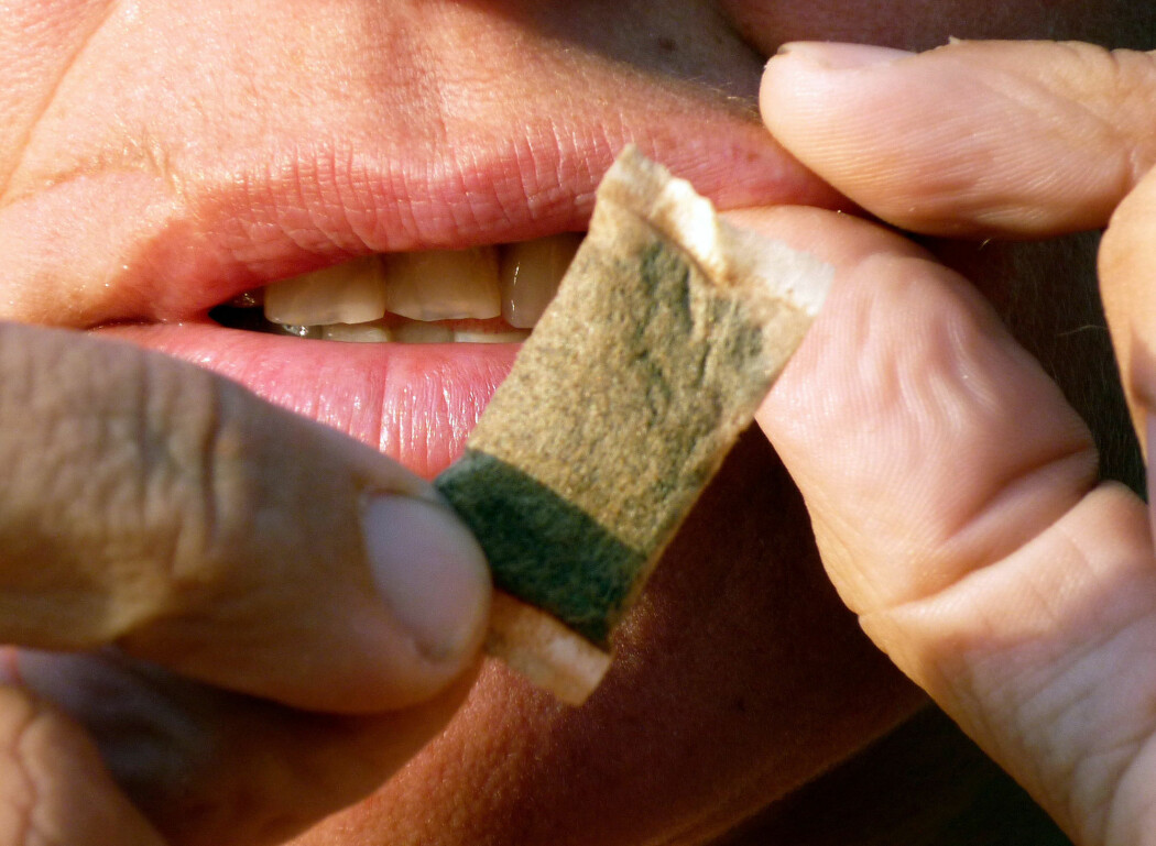 Ifølge ny rapport fra Folkehelseinstituttet gir snus økt risiko for visse sykdommer.