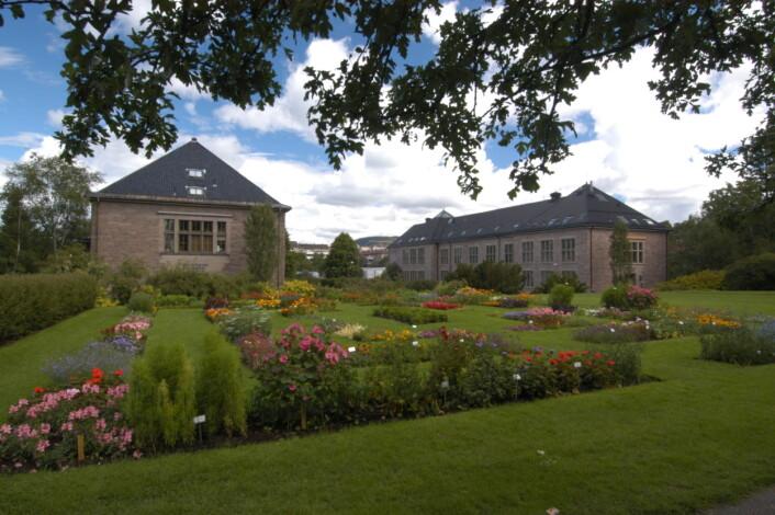 Den største samlinga i Norge finst ved Naturhistorisk museum (NHM) ved Universitetet i Oslo. Foto: Per E. Aas/NHM/UiO