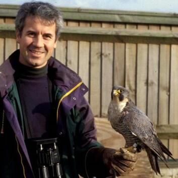Forsker Christian Kierulf Aas ved Naturhistorisk museum er ekspert på flyplassers problemer med fugler. Her med en levende vandrefalk ved flystasjonen RAF Mildenhall i England. (Foto: privat)