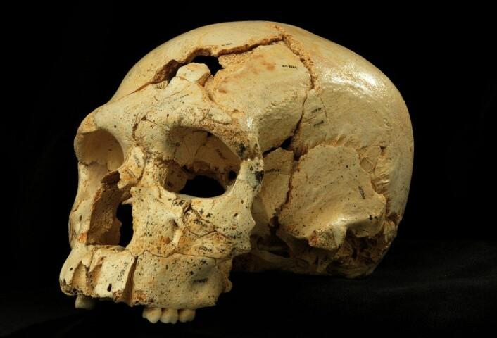 Siden de første funnene i Atapuerca-hulene i 1984 har det blitt til nesten 7000 knokkelfragmenter fra minst 28 individer, og det er fortsatt flere på vei. (Foto: Javier Trueba/Madrid Scientific Films)