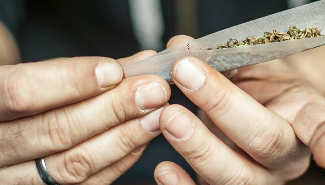 Cannabisbrukere hadde femdoblet risiko for å få medisiner mot psykose