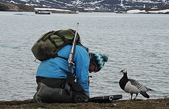 Conflicting consequences of climate change for Arctic geese