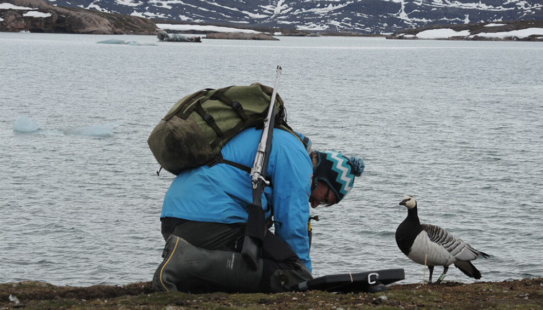 Maarten J.J.E. Loonen, a professor at the University of Groningen's Arctic Centre, checks his data while a study participant looks on. (Photo by Paul Wenzel Geissler.)