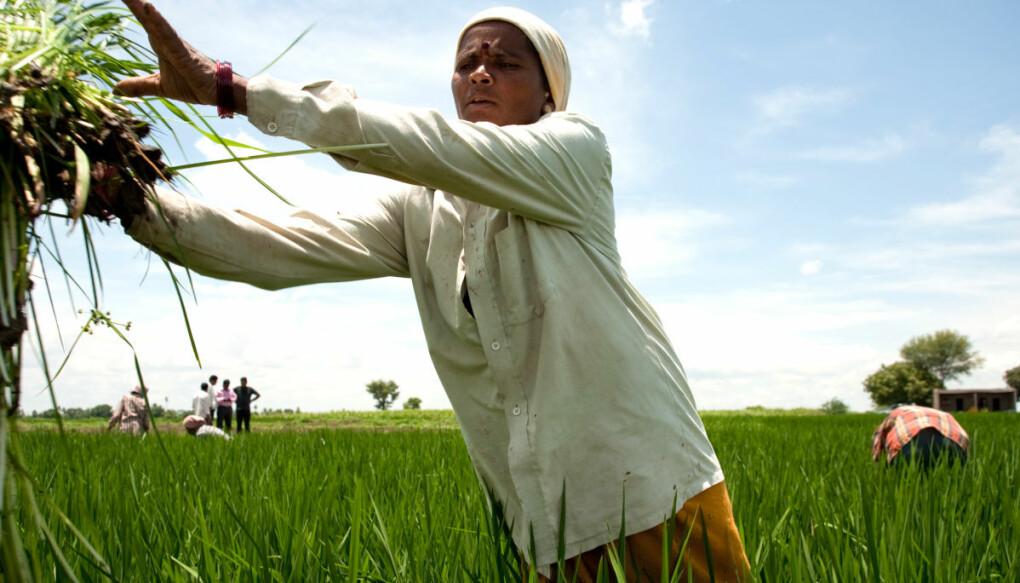 Kvinnelige småbrukere som blir utstyrt med tilsvarende kunnskap og støttesystemer som menn, kan bidra til økt bærekraft i landbruket, større avkastning og bedre mat- og matvaresikkerhet. (Foto: Ragnar Våga Pedersen)