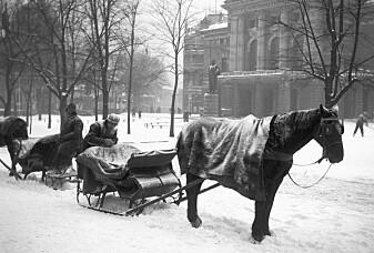 Dyrebeskyttelsen fyller 160 år, men hva drev de med i gamle dager?